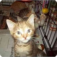 Adopt A Pet :: CALI - Little Neck, NY