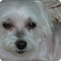 Adopt A Pet :: Lulu #2 - Orange, CA