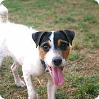 Adopt A Pet :: Ralfie - Austin, TX