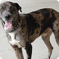 Adopt A Pet :: Oleg - West Los Angeles, CA