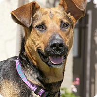 Adopt A Pet :: Tasha von Thaler - Thousand Oaks, CA