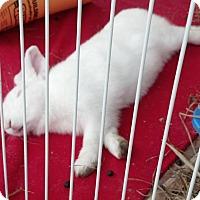 Adopt A Pet :: Lucy - Conshohocken, PA