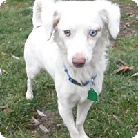Adopt A Pet :: liam - mooresville, IN