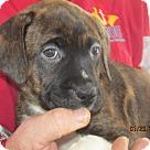 Adopt A Pet :: Edie