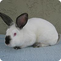Adopt A Pet :: Rigby - Bonita, CA