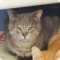 Adopt A Pet :: Simon - Shelby, MI