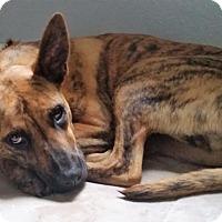 Adopt A Pet :: Aileen aka Paisley - Gainesville, FL