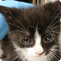 Adopt A Pet :: Wendell $20 - Lincolnton, NC
