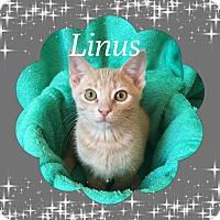 Adopt A Pet :: Linus - Covington, KY