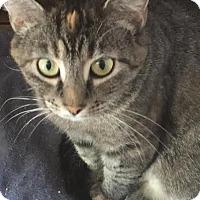 Adopt A Pet :: McKenzie - Columbus, OH