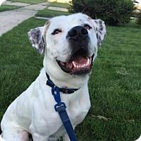 Adopt A Pet :: Hatchett - Grand Rapids, MI