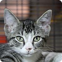 Adopt A Pet :: Mayu - Sarasota, FL