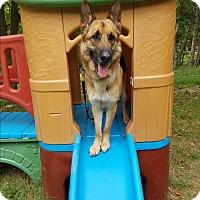 Adopt A Pet :: Sarge - Louisville, KY
