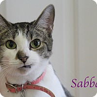 Adopt A Pet :: Sabbath - Bradenton, FL