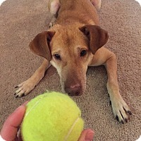 Adopt A Pet :: Gunner-URGENT - Los Angeles, CA
