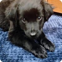 Adopt A Pet :: Diesel - Grafton, WI
