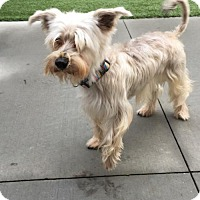 Adopt A Pet :: Stasia/Adoption PENDING - Hillside, IL