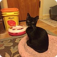 Adopt A Pet :: Zuzu - Overland Park, KS