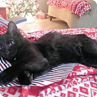 Adopt A Pet :: Blaze AKA Jake - Houston, TX