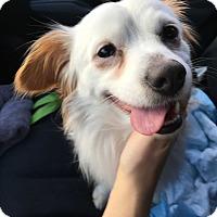 Adopt A Pet :: Hudson - Marina del Rey, CA