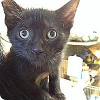Adopt A Pet :: BB King - Island Park, NY