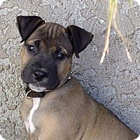 Adopt A Pet :: LEO - Torrance, CA