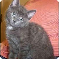 Adopt A Pet :: Rosalyn - Reston, VA