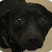 Adopt A Pet :: Nanna - Mahopac, NY