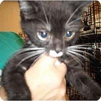 Adopt A Pet :: Chewy - Riverside, RI