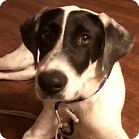 Adopt A Pet :: Sonny - Edisto Island, SC