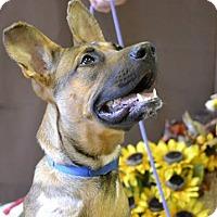Adopt A Pet :: FARGO - Higley, AZ