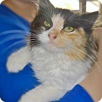 Adopt A Pet :: Chanel - Island Park, NY