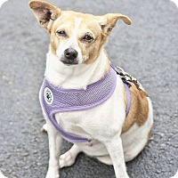 Adopt A Pet :: Prada - Jupiter, FL