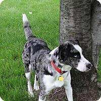 Adopt A Pet :: Frankie - Elk River, MN