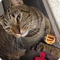 Adopt A Pet :: Beefcake - Newport Beach, CA