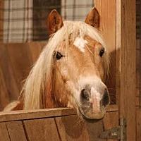 Adopt A Pet :: Neumark - Pleasant View, TN