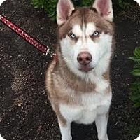 Adopt A Pet :: Charlie - Yreka, CA