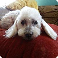 Adopt A Pet :: Steward - Vacaville, CA
