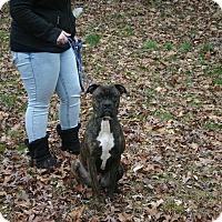 Adopt A Pet :: Ranger - Arden, NC