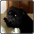 Adopt A Pet :: OSCAR MADISON in Wichita, KS.