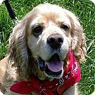 Adopt A Pet :: Parker