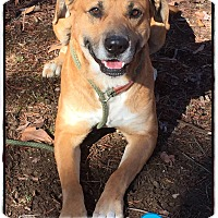 Adopt A Pet :: Buster (reduced fee) - Harrisonburg, VA