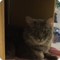 Adopt A Pet :: Junior - Manchester, CT