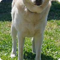 Adopt A Pet :: Cooper II - Midlothian, VA