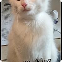 Adopt A Pet :: N.B. King - Muskegon, MI