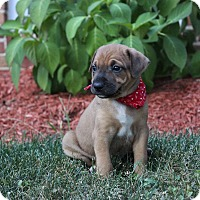 Adopt A Pet :: Ethan - New Oxford, PA