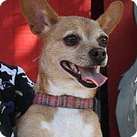 Adopt A Pet :: Mama Chi - Joplin, MO
