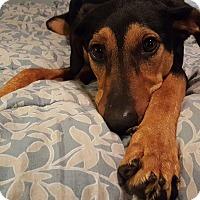 Adopt A Pet :: Minnie - Aurora, IL