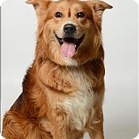 Adopt A Pet :: Rylee - Columbus, OH