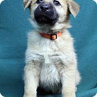 Adopt A Pet :: ANNIE - Westminster, CO